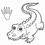 Crocodile Coloring Pages Nile Paw Baby Vector Drawing Gator Animal Wild Alligator Cool Clip Getdrawings Sheet Animals sketch template