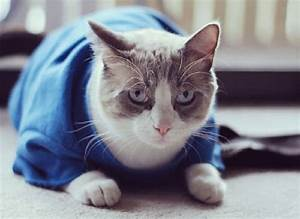 adorable diy cat clothing for your friend