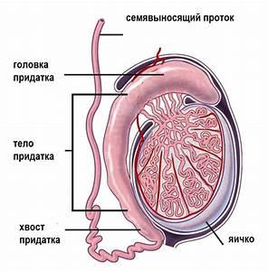 Везикулит простатит лечение