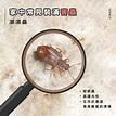 欣立白蟻害蟲防治專家@欣立白蟻除白蟻跳蚤蟑螂害蟲消毒專家|PChome新聞台