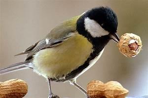 Vögel Im Winter Kindergarten : winterf tterung futtertypen nabu ~ Whattoseeinmadrid.com Haus und Dekorationen