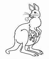 Kangaroo Baby Pouch Colouring Coloring Pages Picolour sketch template