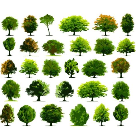 varieties  vector tree illustrations welovesolo