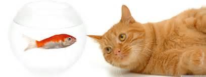 cat and fish animal computer wallpapers desktop backgrounds