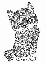 Kitten Cats Coloring Pages Adult Those Animals sketch template