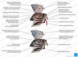 Nasal Cavity Diagram