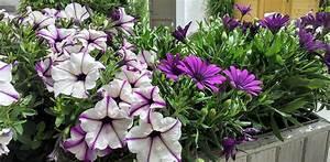 free photo flower box flowers purple violet free With katzennetz balkon mit gucci flora garden