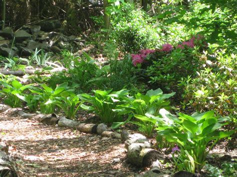wild patch  woodland garden