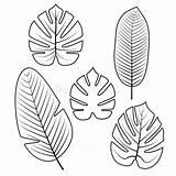 Tropical Outline Leaves Jungle Coloring Palm Leaf Template Drawing Molde Tropische Blatt Isolated Illustratie Templates Imprimir Betrag Abgehobenen Corel Auch sketch template