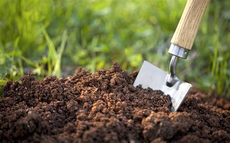 What Is Super Soil And How Do You Make It?
