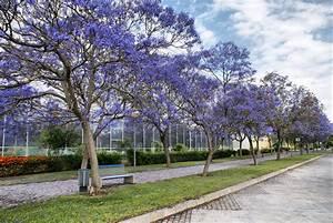 Blau Blühender Bodendecker : blau bl hende b ume in spanien pflanzen baum ~ Frokenaadalensverden.com Haus und Dekorationen