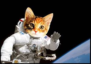 Astronaut Cat (page 3) - Pics about space