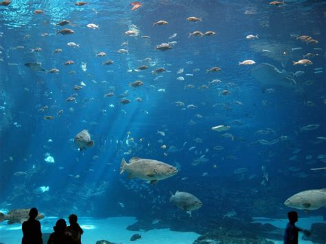 welcome to sopheakttk world top 10 largest aquarium