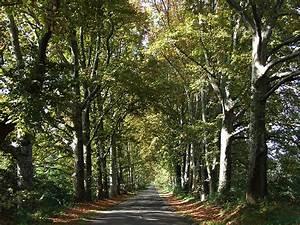 Schöne Herbstbilder Kostenlos : herbst 005 kostenloses hintergrundbild ~ A.2002-acura-tl-radio.info Haus und Dekorationen