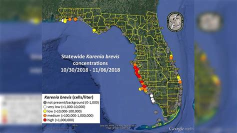 high red tide concentrations  present  tampa bay