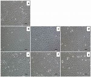 Images Of H9c2 Cells From Different Experimental Groups