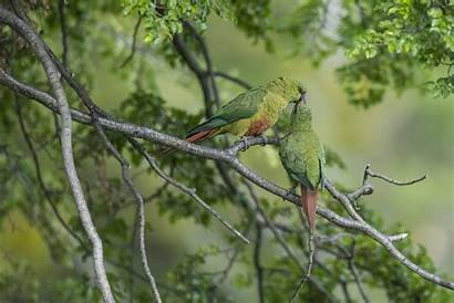 Birds Parrot Trees Plants Wallpapers Awesome