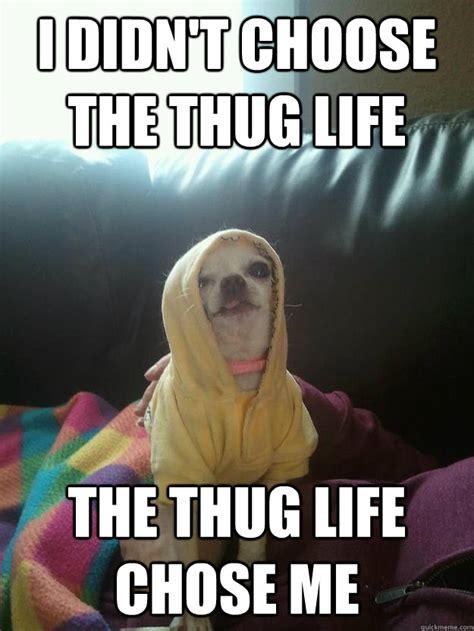 Thug Life Memes - i didn t choose the thug life the thug life chose me thug life chihuahua quickmeme