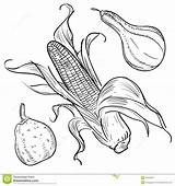 Corn Harvest Illustrations Gourds Illustration Template Plenty Horn Coloring Pages Thanksgiving Doodle Sketch Vector Templates Preview Food Scarecrow sketch template