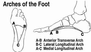 The Arches Of Foot Diagram