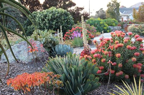 mediterranean landscaping plants morro bay garden at dusk mediterranean landscape other by gardens by gabriel inc