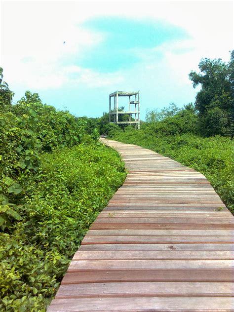 tempat wisata hutan mangrove surabaya