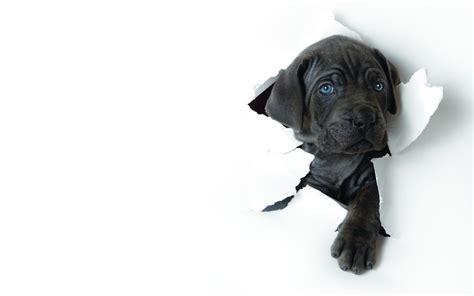 Dogs Wallpapers Hd Pictures