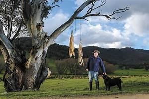 Wild Dogs Wreak Havoc For Sheep Farmers