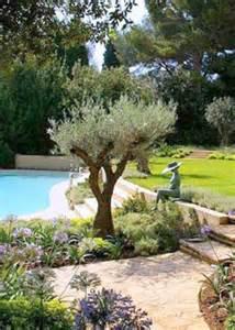 ornamental olive tree garden