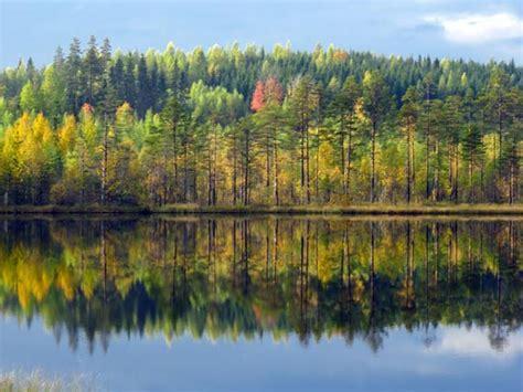 ruska der finnische herbst im rausch der farben