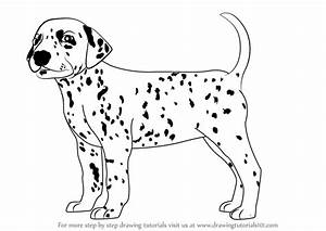 Learn How to Draw a Dalmatian Dog (Dogs) Step by Step ...