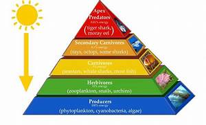 3 Major Types of Ecological Pyramids | Pyramid of Number ...