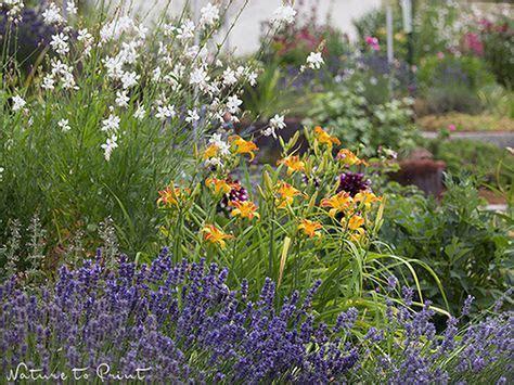 Der Garten Für Intelligente Faule by Pflegeleichte Pflanzen F 252 R Intelligente Und Faule G 228 Rtner