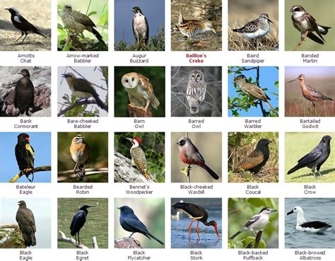 bird species names list pictures to pin on pinterest