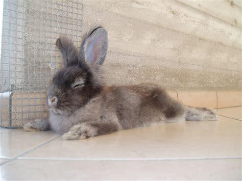 costruire gabbia coniglio come costruire una casa per conigli qzlife
