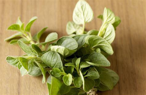 grow  care  oregano