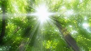 Nature trees forests sunlight sun flare wallpaper ...