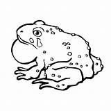 Toad Coloring Pages Captain Printable Animal Template Sheet Animals 52kb 600px sketch template