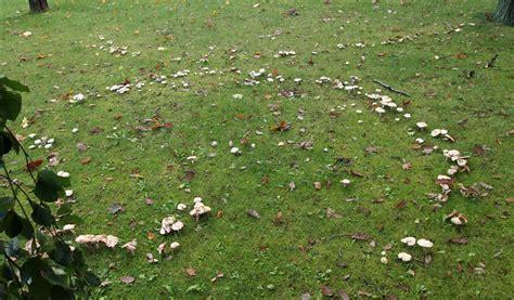 Pilze Im Rasen Gut Oder Schlecht by Pilze Wachsen Im Kreis Was Sind Hexenringe Phlora De