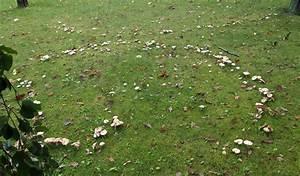Was Hilft Gegen Pilze Im Rasen : hexenringe pilze wachsen im kreis ~ Michelbontemps.com Haus und Dekorationen