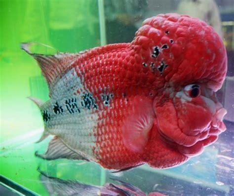 places  visit  maharashtra taraporewala aquarium