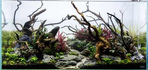 Aquascape Wood by From This To This Aquascape Progression Scape 4 Added