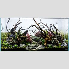 From This To This  Aquascape Progression  Scape 4 Added