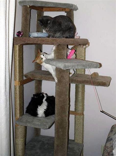 cat climbing tree  buying