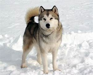 eight below maya - Movie Search Engine at Search.com