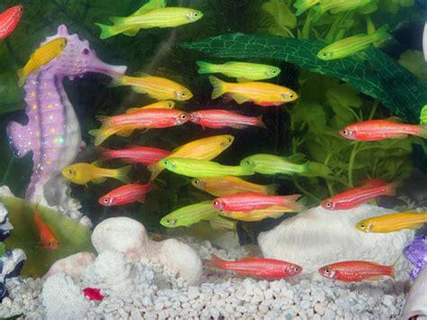 types  aquarium fish  good luck  pics