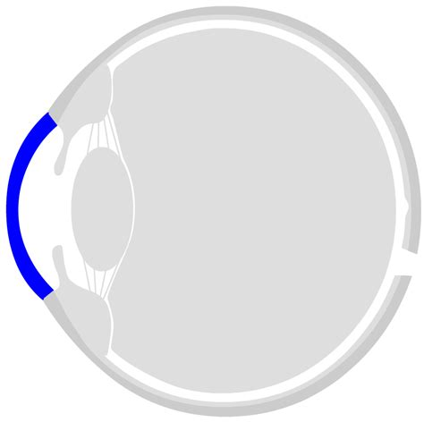 worksheet   human eye structure  function