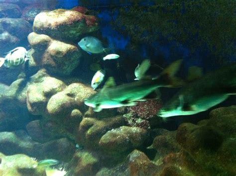 bureau de passeport canada laval aquarium de recrutement 28 images design aquarium
