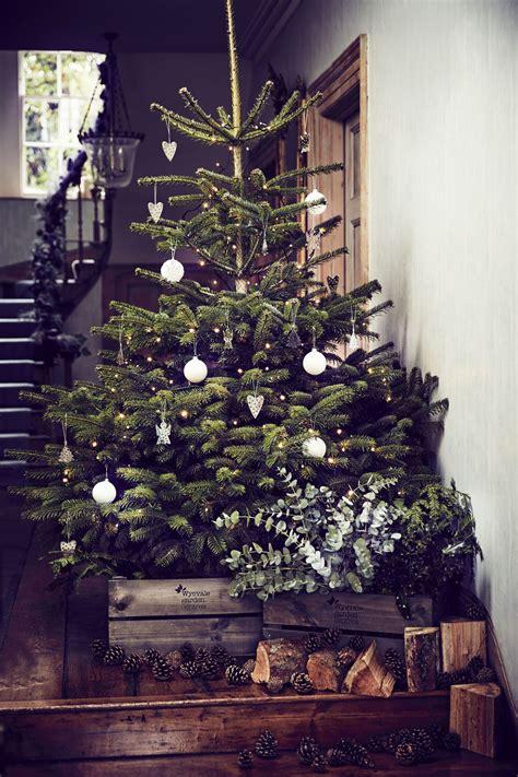 christmas trees buying choosing preparing maintaining
