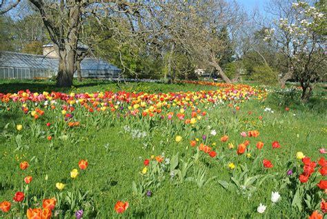 botaniska tr 228 dg 229 rden lund wikipedia